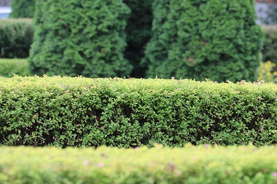 Cómo transformar tu jardín ordinario en extraordinario 2