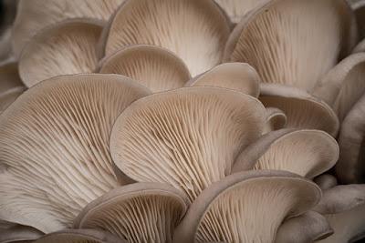peluang usaha budidaya jamur