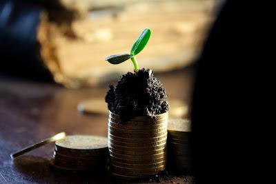 Niewielka roślinka kiełkuje z małej kupki ziemi usypanej na kilku monetach