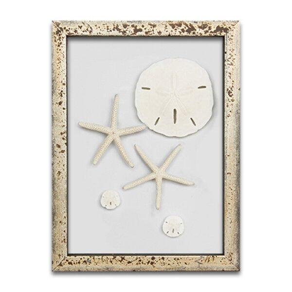 Starfish and Sand Dollars Frame Wall Decor