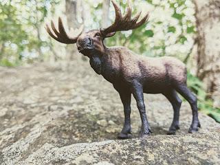 Moose On Stone, Greenlink Trail, Cape Breton Island