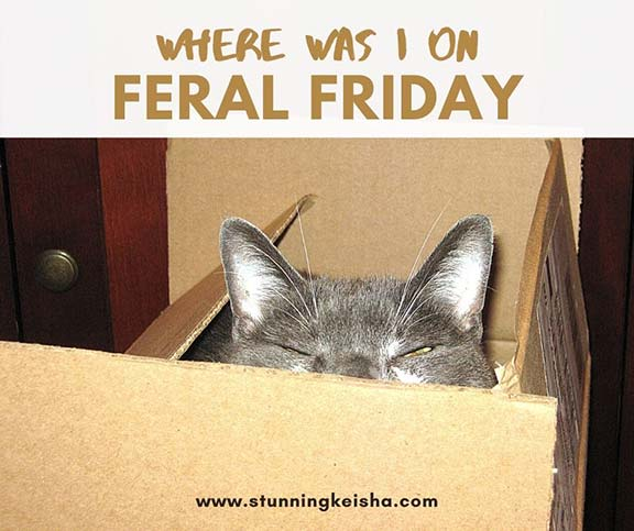 Where Was I on Feral Friday?