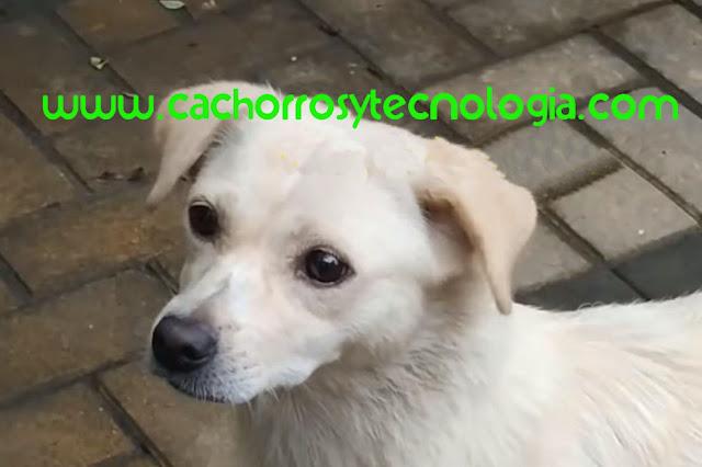 cachorro puppy dog adoptado despedida shurkonrad cachorros y tecnologia 5