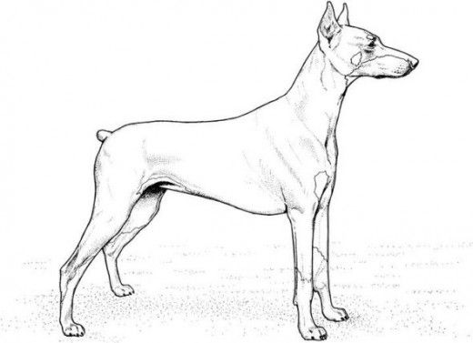 Dogs coloring pages 24