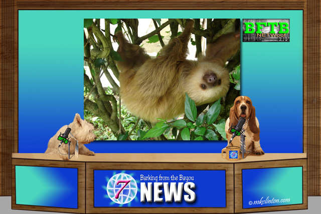 BFTB NETWoof dog news reports on sloth having the slowest metabolism on the planet.
