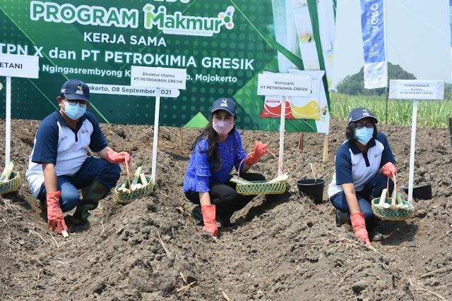Wujudkan Swasembada Gula, Petrokimia Gresik-PTPN X Kawal Pertanaman Tebu 31.000 Hektare
