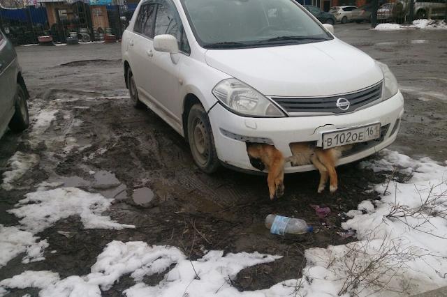 Житель Таганрога катался по городу со сбитой насмерть собакой в бампере — видео