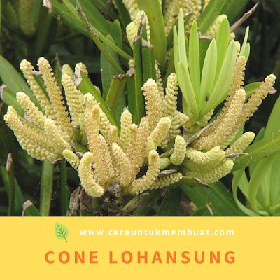 Cone Lohansung