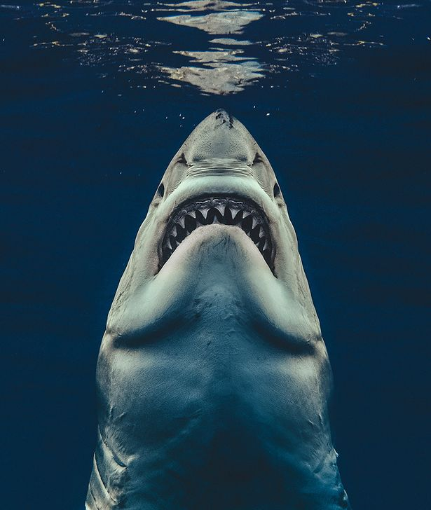 A Brit photographer captured this uncanny portrait of a great white shark