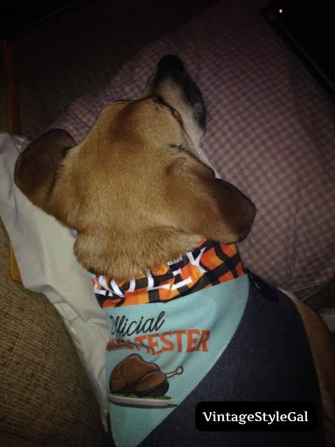 Turkey Tester scarf for puppy