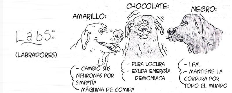 Divertida guía ilustrada de comportamiento de razas de perro