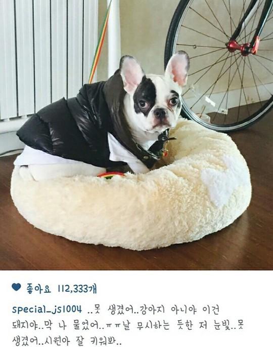 Choi Siwon S Dog