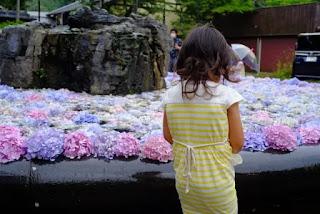 具足池に浮かべられたあじさいの花を見る子供