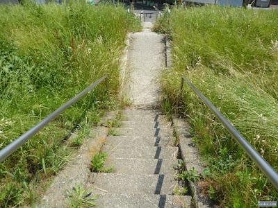 河川敷の階段