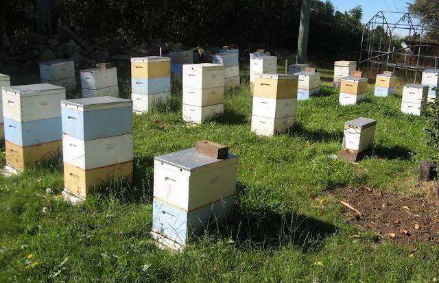 Για σημαντικό εισόδημα από τη μελισσοκομία εκτός απο το μέλι: Μια δεύτερη εναλλακτική....