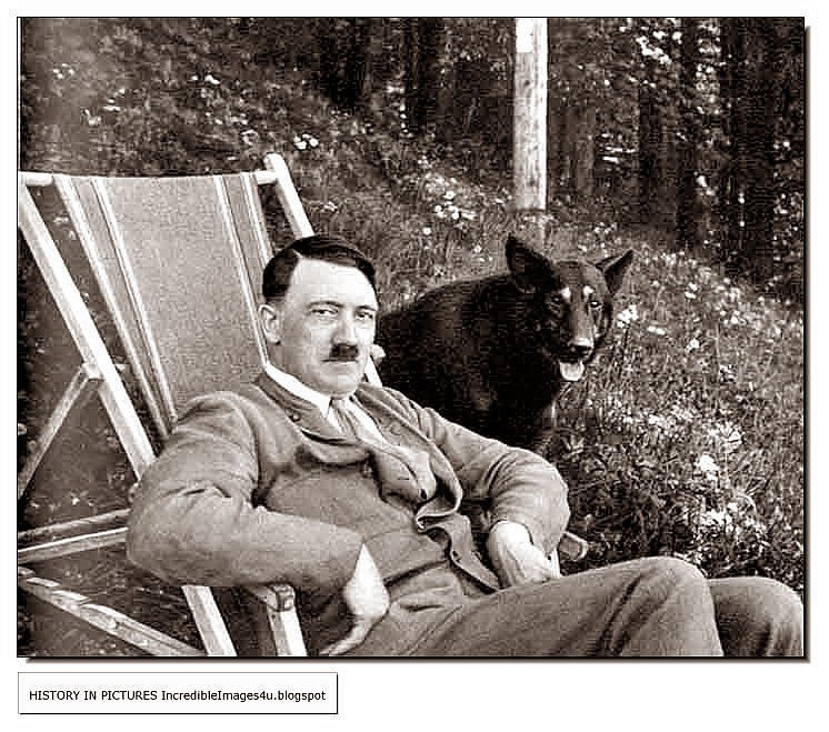 Hitler Quotes On Youth: German Shepherd In War Quotes. QuotesGram