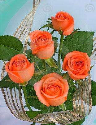 beautiful orange rose wallpaper