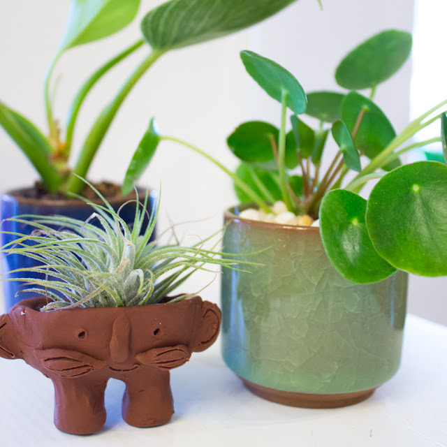 how to make cute DIY Air Plant Troll Pots