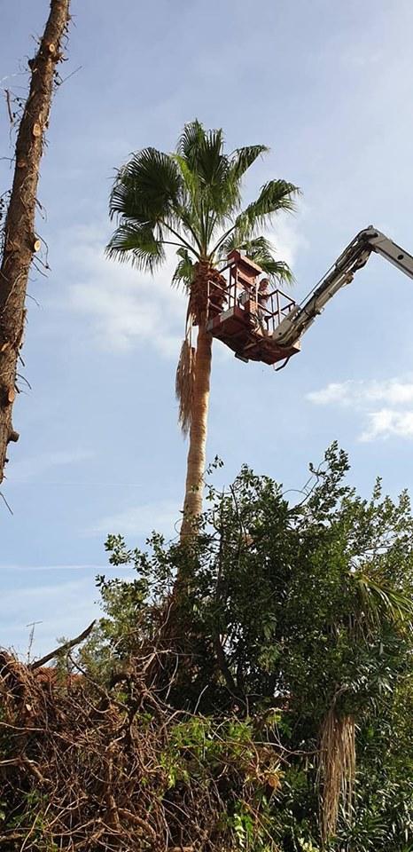 Κοπή  επικίνδυνων  δέντρων στο Πευκοχώρι
