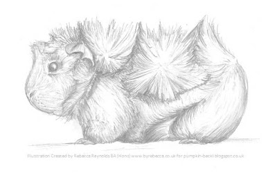 Illustration Abyssinian Guinea Pig Rebecca Reynolds BA Hons