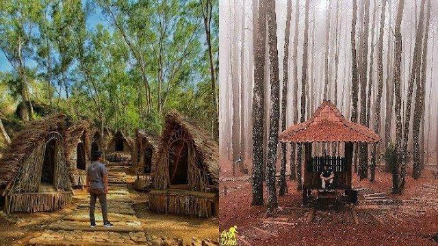 Fasilitas di Hutan Pinus Mangunan Jogja