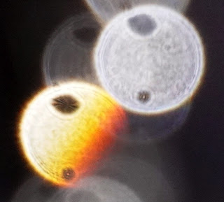 orange orb with two holes