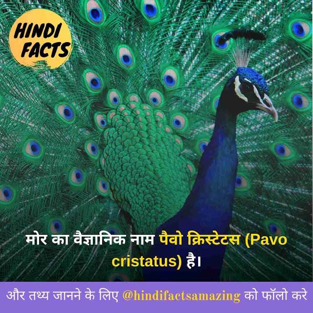 About Peacock in Hindi [2020] - मोर की जानकारी और रोचक तथ्य