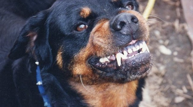 Egynapos újszülöttet marcangolt halálra a család kutyája