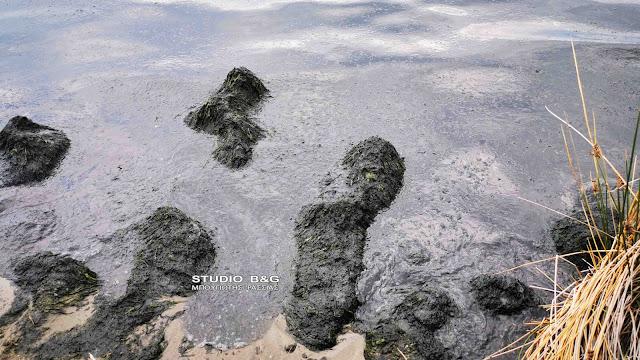 Τρομοκρατήθηκαν στο Ναύπλιο από παχύρρευστη ουσία που κατέκλυσε παραλία (βίντεο)
