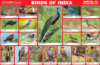 Birds of India Chart