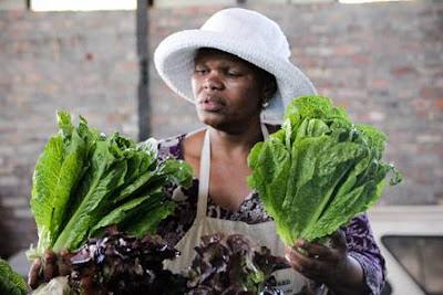@UCookSA Supports Harvest of Hope @AbalimiHOH #Organic #FoodSecurity