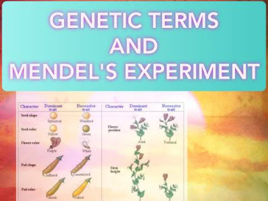 https://www.hotlinepro.xyz/2020/08/genetic-terms-and-mendels-experiments_28.html