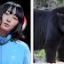 Crímenes de Japón #28 | Integrante de Akaiko-en muere & ataques de osos