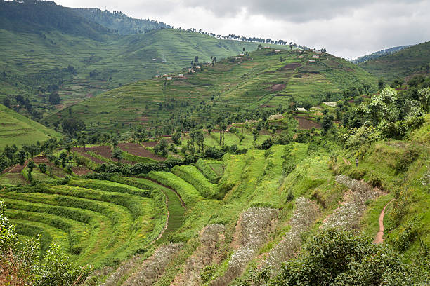 What is restoration agriculture?