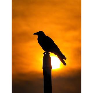 Bird Silhouette Photography