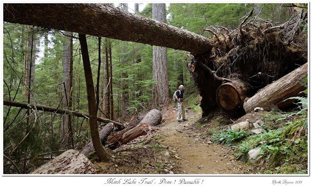 Mink Lake Trail: Done! Passable!