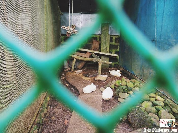 Dacara-Farm-Bicol