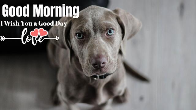 Good morning images with Dog, Good Morning Animals image