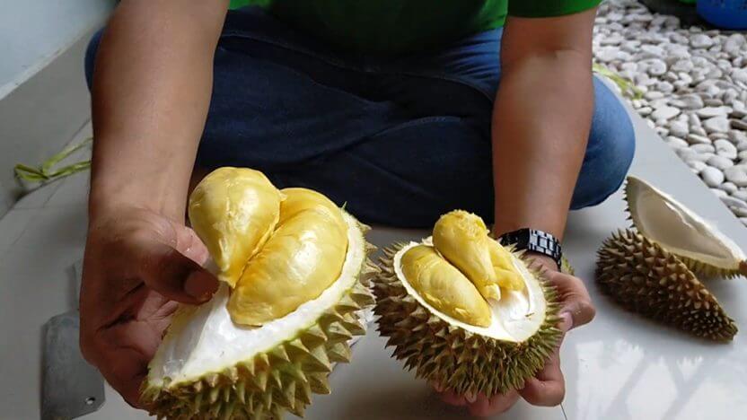 durian Tong medaye