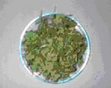 Gambar sayuran yang dikeringkan