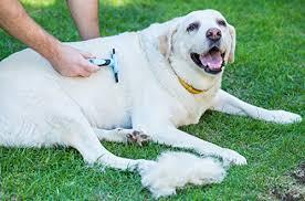 La herramienta para la preparación del perro reduce drásticamente el vertimiento en solo 15 minutos - por DakPets