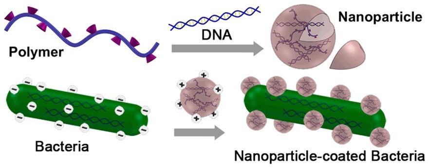 بكتيريا مُغطاة بجزيئات النانو قد تعالج السرطان
