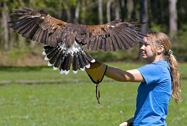 Center for Birds of Prey em Orlando