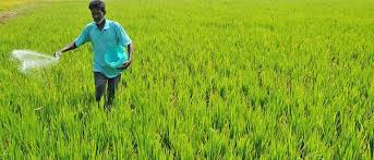 Union Government to introduce Direct Transfer of Fertilizer Subsidy