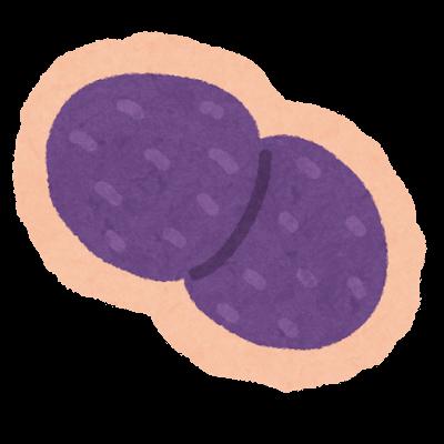 肺炎レンサ球菌のイラスト