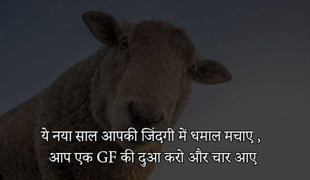 comedy shero shayari in hindi