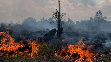 Jenis, Penyebab dan Bahaya Kebakaran Hutan