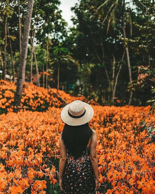 Taman Bunga Amarilis Jogja