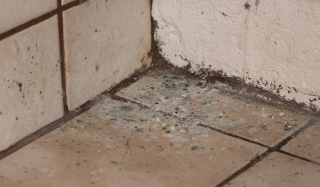4 Things Every Employer Should Do About Mold, Mold, Lifestyle