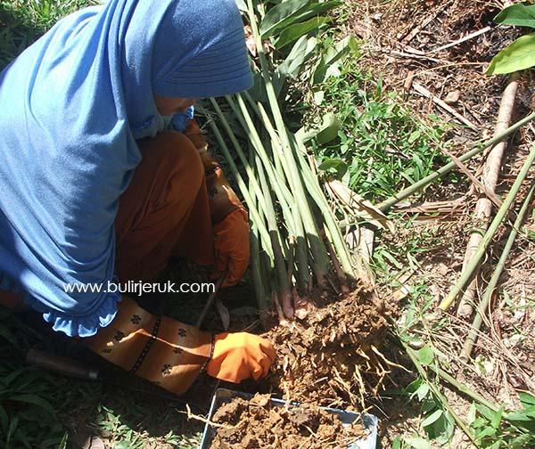 5 Manfaat Berkebun : Menyehatkan